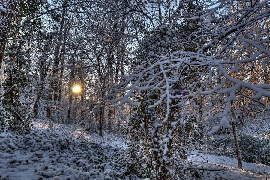 Winter2-small