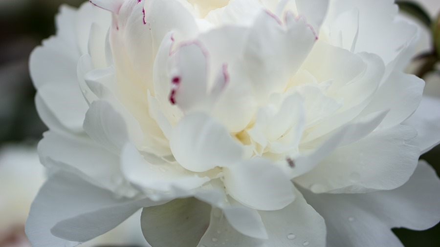 RG-White1