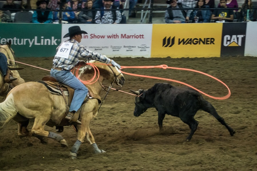 rodeo1-small